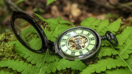 tarcza zegara : Pocket watch on fern leaves