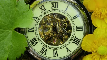 tarcza zegara : Pocket watch on green moss
