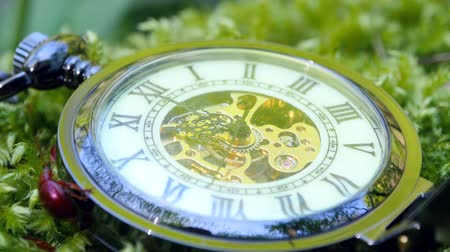 minute : Pocket watch on green moss