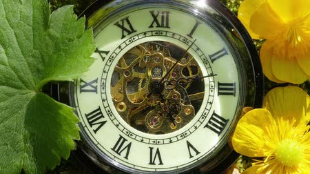 pocket watch : Pocket watch on fern leaves