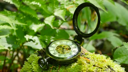 pocket watch : Pocket watch on green moss