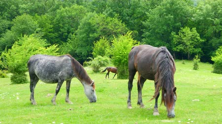 pastar : Horses grazing in the field on a Sunny day Vídeos