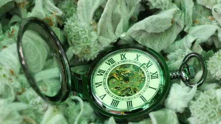 pocket watch : Pocket Watch closeup