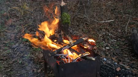 костра : Bonfire in the forest in windy weather Стоковые видеозаписи
