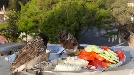 крошки : Birds peck food