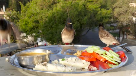 migalhas : Birds peck food