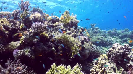 reef life : Underwater landscape of coral reef. Amazing, beautiful underwater marine life world of sea creatures in Red Sea. Scuba diving and tourism.
