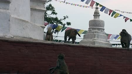 patan : Kathmandu, Nepal - 17 October 2011: Dog runs after a the monkeys on streets of Kathmandu in Nepal. Very funny.