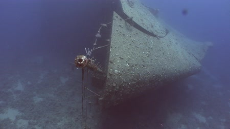 salem express : Ship Salem Express wrecks underwater in the Red Sea in Egypt. Extreme tourism on the ocean floor in the world of coral reefs, fish, sharks. Researchers of wildlife blue abyss. Deep diving.