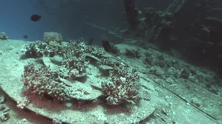salem express : Corals on part of sunken ship Salem Express underwater in the Red Sea in Egypt. Extreme tourism on ocean floor in world of coral reefs, fish, sharks. Researchers of wildlife blue abyss. Deep diving.