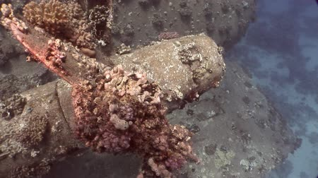 salem express : Screw close up ship Salem Express wreck on seabed underwater in Egypt. Extreme tourism on ocean floor in world of coral reefs, fish, sharks. Researchers of wildlife blue abyss. Deep diving. Stock Footage