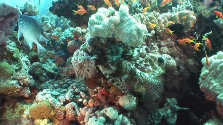deepsea : School of yellow fish on background underwater landscape in Red sea. Swimming in world of colorful beautiful world of coral reefs and algae. Inhabitants in search of food. Abyssal diving.