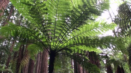 Új zéland : Forest in amazing landscape in New Zealand. Travel and tourism in the world of wildlife.