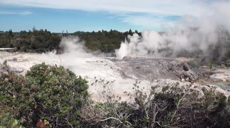 bowels : Geysers hot springs on background of forest and sky horizon in New Zealand. Beautiful amazing nature. Travel and tourism in the world of wildlife. Stock Footage