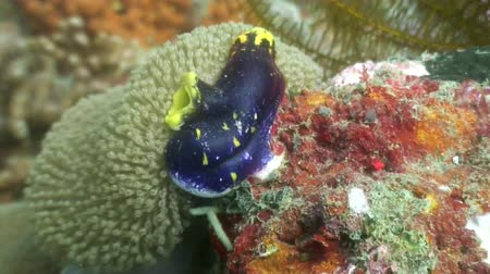 deepsea : Sea sponges underwater in ocean of wildlife Philippines.Travel in world of unique colorful beautiful ecosystem nature coral, algae, fish. Diving. Stock Footage