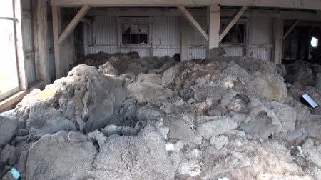 hides : Dump of sheep hides in Patagonia. Terrible place in Tierra del Fuego.