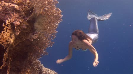 sereia : Underwater model free diver swims in mermaid costume in Red Sea. Filming a movie. Young girl smiling at camera in marine landscape, coral reefs, ocean inhabitants.