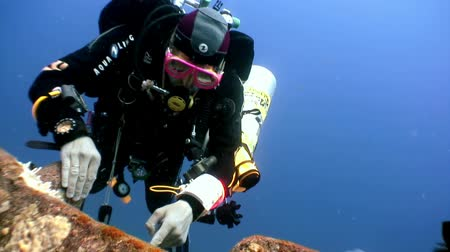 salem express : Red Sea, Egypt - 21 June 2015: Scuba divers swimming explore shipwreck Salem Express deep underwater. Secret of sunken ship which crashed on coral reef. Historical place of tragedy.