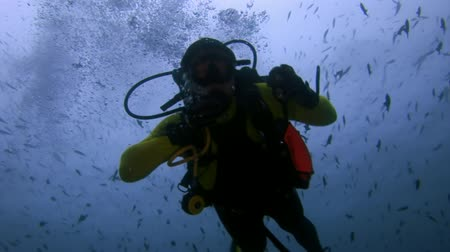 napoleon : Maldives -16 October 2010: Diver underwater on seabed. Unique amazing video footage. Abyssal relax diving. Natural aquarium of sea and ocean.