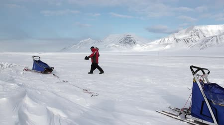 eskimo : Spitsbergen, Norway-21 April 2011: People expedition on dog sled team husky Eskimo road of North Pole in Arctic. Way from airport Longyear to Pyramiden Spitzbergen on background of glacier Svalbard. Stock Footage