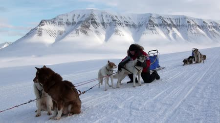 eskimo : Spitsbergen, Norway-21 April 2011: Man at base of dog sled team husky eskimo on North Pole in Arctic. Way from airport Longyear to Pyramiden Spitzbergen on background of mountains Svalbard.