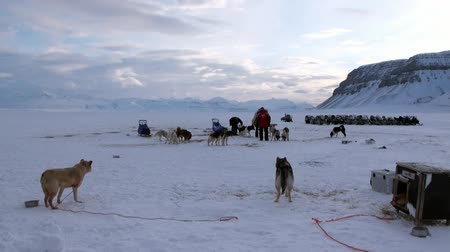 eskimo : Spitsbergen, Norway-21 April 2011: People expedition on dog sled team husky Eskimo road of North Pole in Arctic. Way from airport Longyear to Pyramiden Spitzbergen on background of mountains Svalbard. Stock Footage