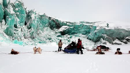 snowy background : Spitsbergen, Norway-21 April 2011: People expedition on dog sled team husky Eskimo road of North Pole in Arctic. Way from airport Longyear to Pyramid Spitsbergen on background of glacier Svalbard. Stock Footage