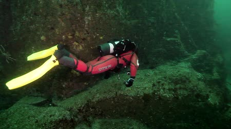csibész : Russia, Barents Sea- 23 May 2017: Diver underwater on seabed of Kamchatka. Nature in clean transparent cold water. Wildlife on background of blue marine in Arctic ocean. Stock mozgókép