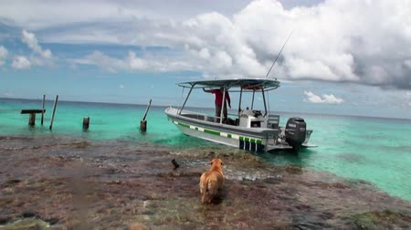 Полинезия : Tahiti Island French Polynesia - 26 May 2018: Dog escorts a man to a trip in a boat in ocean. Picturesque wild nature and beautiful landscape.