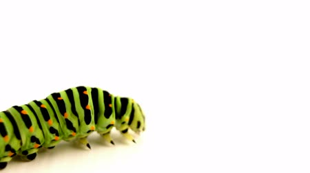 ползком : crawling caterpillar Стоковые видеозаписи