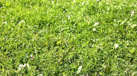 çim : green grass