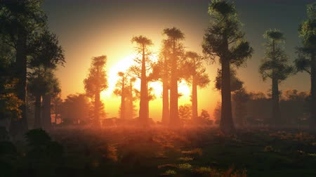 tündér : rising sunrise in forest