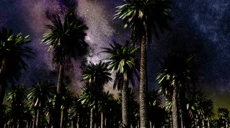 floresta tropical : Star Time Lapse, Milky Way Galaxy Moving Across the Night Sky and Palms