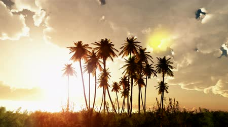 outside view : Tropical jungle background with palm tree silhouettes at sunset