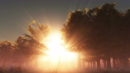 morning : A beautiful morning with sunrays shining through the forest trees