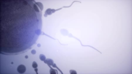 plemniki : sperm and egg cell. frosen microscopic research Wideo