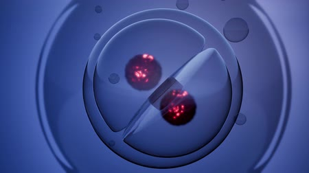 the conception : loop rotate cell division illustration Stock Footage