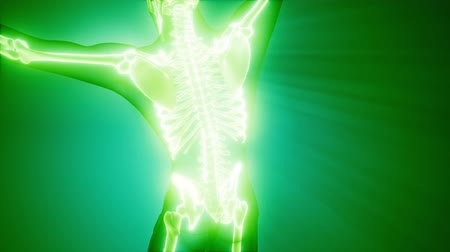 costelas : human skeleton radiography medical scan Stock Footage