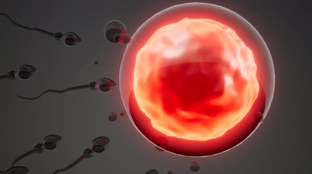 plemniki : sperm and egg cell