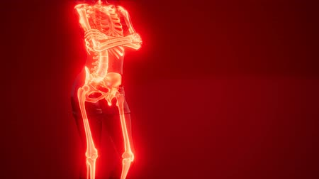 radiation therapy : Human Skeleton Radiography Scan