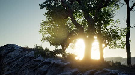 joshua : Trees on Rocks in Mountains Stock Footage