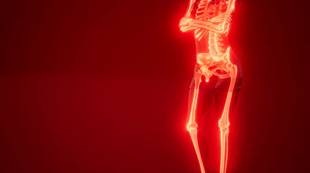 tomography : Human Skeleton Radiography Medical Scan