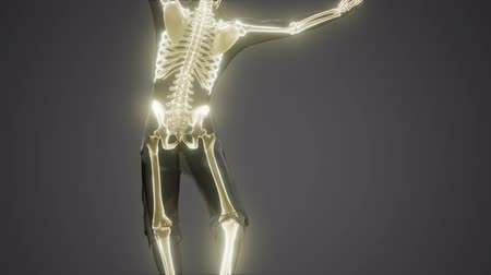 esquelético : human skeleton radiography medical scan Stock Footage