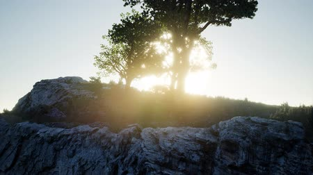 Trees on Rocks in Mountains at Sunset Stock Footage