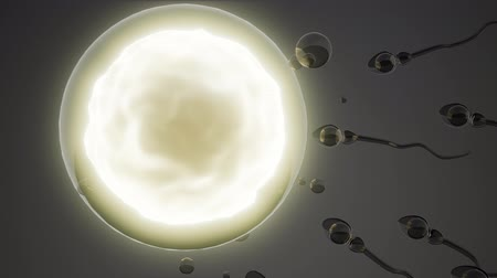 antykoncepcja : sperm and egg cell. model of microscopic research Wideo