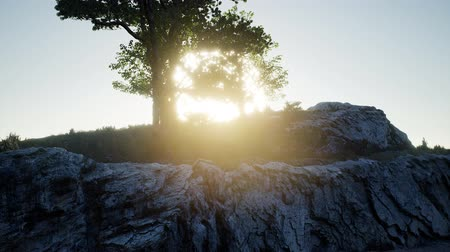 Trees on Rocks in Mountains at Sunset Wideo