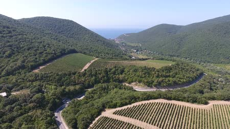 vignoble : Caucasian vineyards in Abrau-Dyurso, Russia. from the height of bird flight