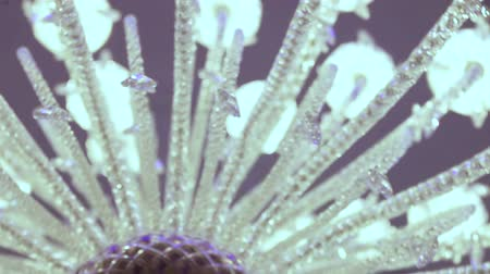 żyrandol : Camera is rotated by a large luxury crystal chandelier Wideo