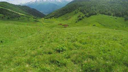 pasture land : Path in alpine meadows