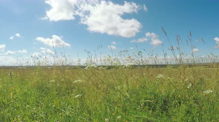 boggy : Meadow grass on outskirts town